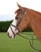 Dyon Fancy Flash Noseband -suitset