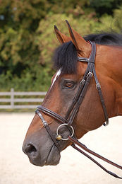 Dyon Flash Noseband -suitset B164